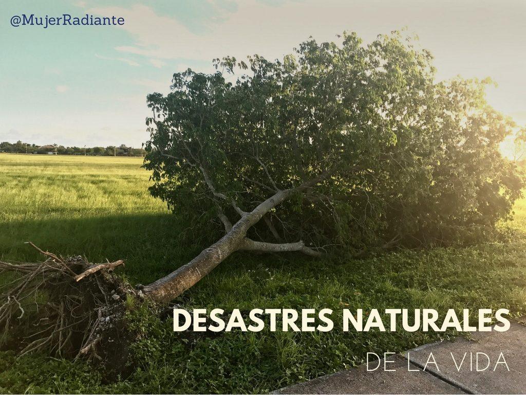 Los desastres naturales (3)